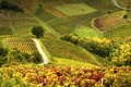 Картинка поле, Франция, склон, холм, виноградник, Божоле