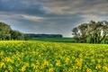 Картинка поле, деревья, Германия, рапс, Hessen
