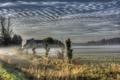 Картинка поле, туман, дом, утро