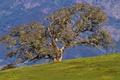 Картинка поле, природа, фон, дерево