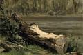 Картинка пейзаж, природа, картина, Карлос де Хаэс, Штудия Ствола Дерева