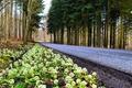 Картинка цветы, Mogelkaer, обочина, дорога, деревья, Midtjylland, Дания