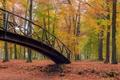 Картинка осень, лес, листья, деревья, пейзаж, мост
