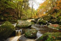 Картинка лес, вода, деревья, река, камни