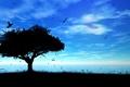 Картинка море, пейзаж, птицы, природа, дерево, вектор, силуэт