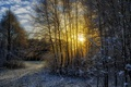 Картинка зима, лес, солнце, снег, пейзаж