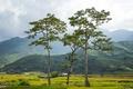 Картинка зелень, листья, деревья, люди, холмы, крона