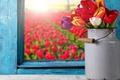 Картинка colorful, окно, тюльпаны, flowers, tulips, window, bouquet