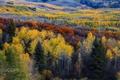 Картинка осень, лес, природа, краски
