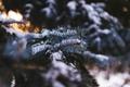 Картинка зима, снег, иголки, елка