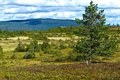 Картинка лес, облака, деревья, поляна, Норвегия, Hamar