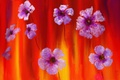 Картинка цветы, краски, картина, лепестки