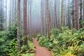 Картинка лес, деревья, туман, Вашингтон, США, тропинка, кусты