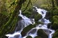 Картинка лес, вода, река, камни, мох, поток