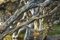 Картинка лес, деревья, Олбани, Западная Австралия, пляж Нормана, Melaleuca
