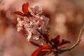 Картинка цветы, дерево, ветка, весна, цветение