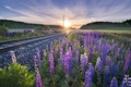 Картинка цветы, утро, железная дорога