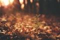Картинка лес, свет, дерево