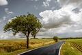 Картинка дорога, поле, небо, трава, облака, пейзаж, природа
