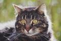 Картинка кошка, глаза, кот, усы, фон, нос