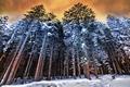 Картинка собака, лес, зима