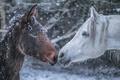 Картинка зима, снег, кони