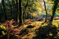 Картинка осень, лес, трава, деревья, мох, солнечно