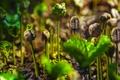Картинка растение, росток, кофе, плантация, Коста-Рика