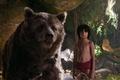 Картинка друг, мальчик, медведь, Балу, Маугли, The Jungle Book, Книга джунглей