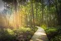 Картинка лес, деревья, дорожка