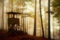 Картинка лес, туман, вышка