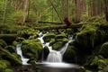 Картинка лес, вода, деревья, зеленый, река, камни, мох