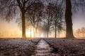 Картинка дорога, деревья, туман