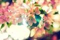 Картинка природа, текстура, Blossoms of Spring