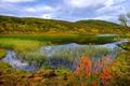 Картинка осень, трава, река, камыши, Норвегия, Aunfjellet