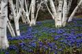 Картинка деревья, цветы, природа