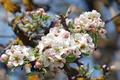 Картинка пчела, дерево, весна, яблоня