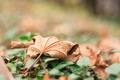 Картинка осень, лист, листок, сухой