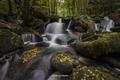 Картинка лес, природа, река, листва, осень.камни