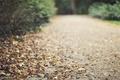 Картинка дорога, осень, листья