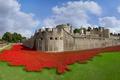 Картинка Англия, Лондон, крепость, Тауэр, арт-инсталляция, керамические маки, 100-летие начала Первой мировой войны