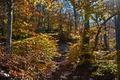 Картинка осень, лес, листья, солнце, лучи, деревья, камни