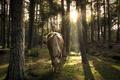 Картинка лес, природа, конь