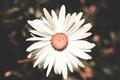 Картинка белый, цветок, лепестки