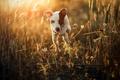 Картинка взгляд, свет, природа, друг, собака, утро
