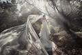Картинка лес, девушка, платье, невеста, фата