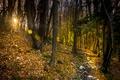Картинка осень, лес, солнце, лучи, деревья, блики, тропинка
