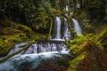Картинка деревья, парк, водопад, мох, США, Silver Falls State Park