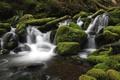 Картинка лес, вода, река, камни, мох
