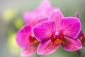 Картинка макро, экзотика, орхидея, боке